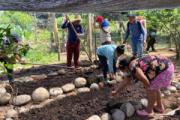 Unidad de Víctimas devuelve huerta ancestral a indígenas de Caquetá
